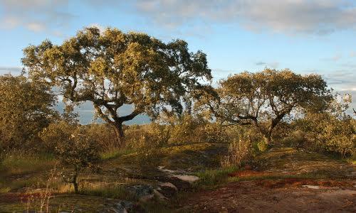Bubulcus & Bolotas conforto e sustentabilidade em harmonia